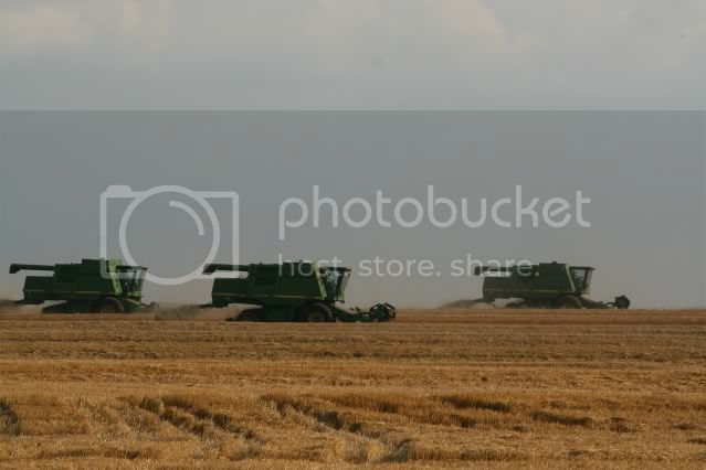 wheat,wheat harvest,harvest,Farm