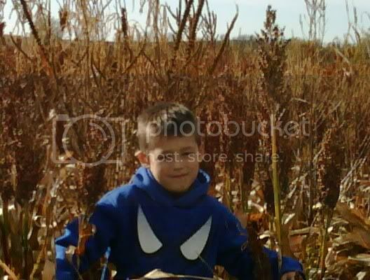Milo,Grain Sorghum,Farm,family farm